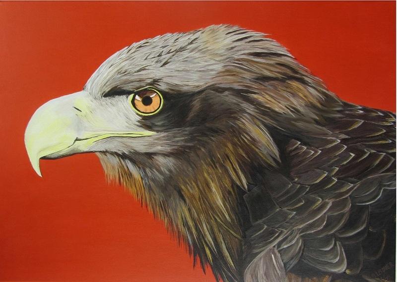 Adler1132-50b800h569