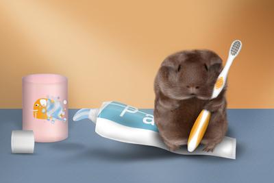 Meerschweinchen auf Tube