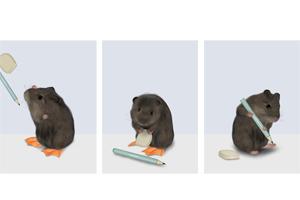 Hamster radiert